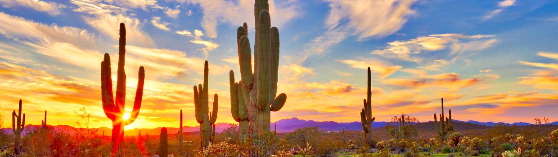 Arizona Landscape - Directors blog banner
