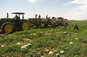 Migrant and Seasonal Farmworker