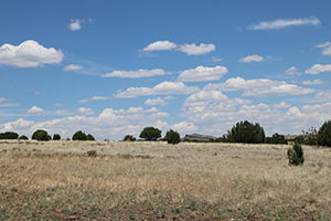 Rural landscape with dry grass in the foreground, trees and shrubs in the middle ground, and a cloudy sky in the background.