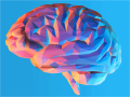 the human brain in colorful shades