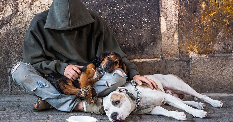 A homeless man wearing a hooded sweatshirt sits cross-legged on a stone-paved path. He is holding a small dog while a larger dog lays next to him. There is a collection cup in front of him.