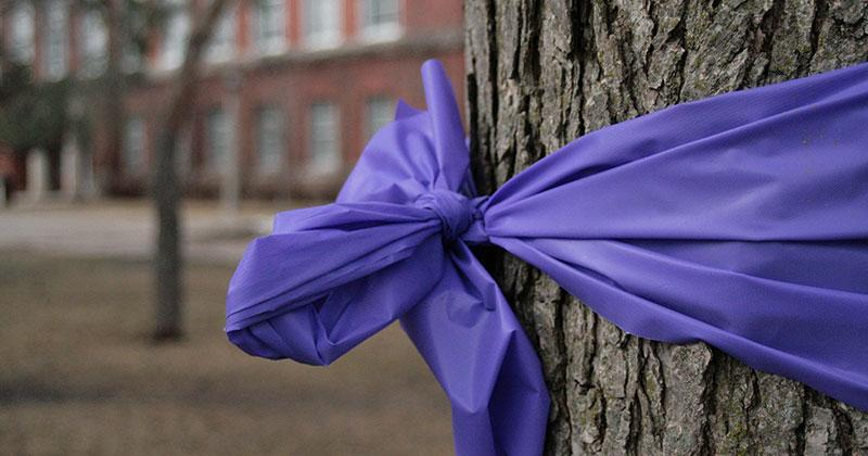 a tree trunk with a purple ribbon wrapped around it